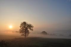 In der Ruhe liegt die Kraft (Uli He - Fotofee) Tags: ulrike ulrikehe uli ulihe ulrikehergert hergert burghaun nikon nikond90 fotofee plätzer meinweg nebel november morgensonne sonne sonnenlicht warmeslicht sonnenschein bäume feld felder licht schatten