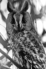 Je t'ai vu (eric.hanss) Tags: knoersheim nature hiboumoyenduc alsace france oiseau lieu basrhin animal moyenduc