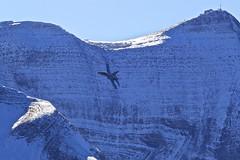 Axalp: SwissAirForce McDonnell Douglas F/A18C J-5014 (Roland C.) Tags: offairport axalp offairportaxalp switzerland fa18c mcdonnell mcdonnelldouglas airforce swissairforce militar airplane aircraft hornet