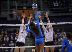 UW UCLA-FT4I0462 (Pacific Northwest Volleyball Photography) Tags: volleyball ncaa pac12 pac12vb uwhuskies washington ucla