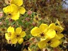 Wildflowers ... Happy Floral Thursday (Mr. Happy Face - Peace :)) Tags: naturelover cans2s scenery autumn art2017 wildflowers yellow roses