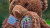 Yo te ocuparé de ti (Renate Bomm) Tags: 7dwf bär landscapes project365 renatebomm samyangaf35mmf28 smileonsaturday sonyilce6000 teddy selfmadesmiley smiley inexplore toy spielzeug treuerfreund funnest underfoot camunderfoot 52of2017