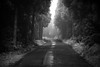 road thru dark forest (p_v a l d i v i e s o) Tags: 24105mm 5d3 archipelagooftheazores arquipelagodosaçores azores açores canon5d canon5dmk3 canonef24105mmf4lisusm canoneos5dmarkiii ef24105mmf4 forest terceira bw blackandwhite dark forestpath lowkey mistériosnegros monochrome monocromatico monocromatique monocromático polarizingfilter angradoheroísmo portugal pt