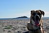 BIRRA PLAYA (davidmartinezcarpintero) Tags: perro birra mascota playa carboneras almeria paseo animal pet dog