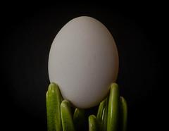 Organic egg (frankmh) Tags: egg organic ecological food macro hittarp skåne sweden indoor gogreen