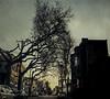 W Philly tree4 (tonywoodphoto) Tags: photoshop textures composite street streetphotography streetphotographer light mood timeofday documentary
