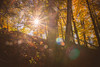 Let the sun shine In (A Great Capture) Tags: agreatcapture agc wwwagreatcapturecom adjm ash2276 ashleylduffus ald mobilejay jamesmitchell toronto on ontario canada canadian photographer northamerica torontoexplore fall autumn automne herbst 2017 sunshine sun woods forest rougeurbannationalpark therouge urban national park trees