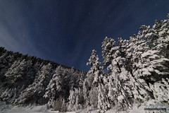 Snowy Pine Moonlight (kevin-palmer) Tags: bighornmountains bighornnationalforest wyoming night sky stars starry moonlight moonlit blue white snow snowy cold november fall autumn pine trees nikond750 samyang rokinon14mmf28 clouds highway14 dayton