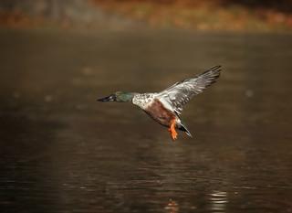 Flying Shoveler...