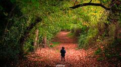 Vallée du Liveau (CREE PING) Tags: liveau gorges 44 loireatlantique bretagne breizh bzh automne paysage landscape canon canon7d creeping couleurs chemin nature ngc france french floral forêt 1740mml