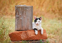 WAITING IS THE TRUE SIGN OF LOVE (Irene2727) Tags: cat animal stone trunk fields outdoors nature