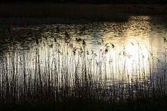 luces y sombras (Rafa perena) Tags: atardecer naturaleza campo landscapes paisaje rio lago agua angular montaña orilla contrastes colores nikon d7100 scenery sunset airelibre nature