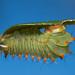 Polyphemus Moth Caterpillar - 3rd Instar Larva (jgrant863) Tags: