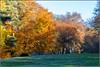 7D2_4470-Edit (Colin RedGriff) Tags: autumn virginiawater englefieldgreen england unitedkingdom gb