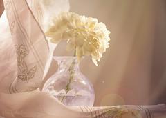 The last chrysanthemum (Elisafox22 slowly catching up ;o)) Tags: elisafox22 sony ilca77m2 100mmf28 macro macrolens telemacro stilllife flower chrysanthemum yellow texture textured curtain netcurtain design glass vase perfumebottle pink crystal light lightflare sunshine elisaliddell©2017