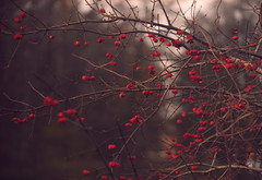 DSC_1979 (FMAG) Tags: 2017 żabieniec zalesie jesien