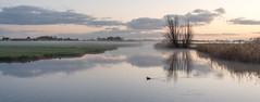 Waterland (Jorden Esser) Tags: monday middendelfland november farm fog grass landscape mist tree waterscape panorama nederlandvandaag