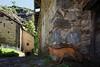 Val d'Aosta - Valle di Gressoney, Perloz: Chemp, la volpe e le galline (mariagraziaschiapparelli) Tags: valdaosta valledigressoney montagna mountain monterosa chemp perloz angelobettoni sculture estate allegrisinasceosidiventa