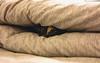 伊伊 hid in comforter~😊♥️♥️♥️ 棉被裡的貓頭伊伊~😂 (Evo-PlayLoud) Tags: canonpowershotg1x canon g1x powershot cat kitty 貓 伊伊 棉被 pet 寵物 玳瑁