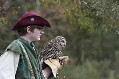 Barred Owl (Find The Apex) Tags: louisiana louisianarenaissancefestival owl barredowl