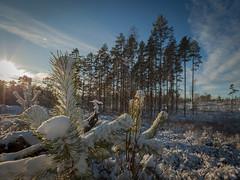 20171119003955 (koppomcolors) Tags: koppomcolors värmland varmland sweden sverige scandinavia skog snö snow winter vinter