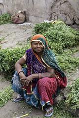 All in a days work (timhughes8) Tags: d500 fruit vegetable flower jaipur rajasthan market seller vendor