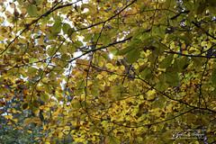 Farandole d'automne - de Christèle Boulanger