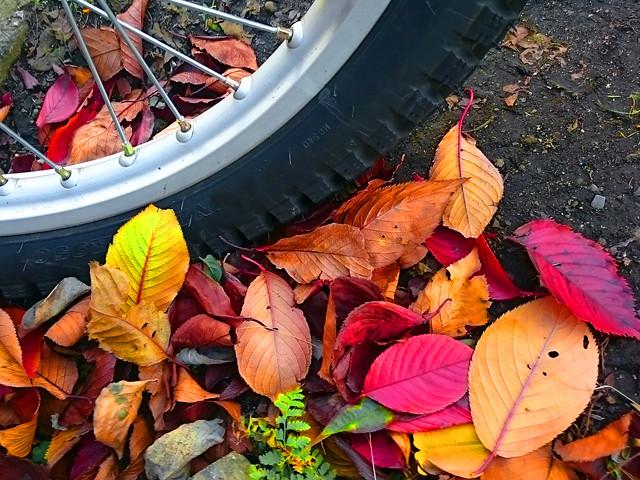 leaf-wheel