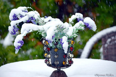 Winter without snow is like soufflé without puffing. (nyomee wallen) Tags: winterwithoutsnowislikesouffléwithoutpuffing inmygarden finland scandinavia north suomi polar scandinavianwinter winterwonderland officiallywinter