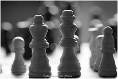 Play chess (HP035521) (Hetwie) Tags: game play macromonday macro king queen maacromaandag spel chess schaken helmond noordbrabant nederland nl