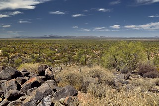 The Long View Across the Desert Landscape and Mountains Far Away... (Saguaro National Park)