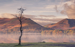Autumn Watch (Captain Nikon) Tags: lonesometree derwentwater lakedistrict misty mist nationalpark autumnal autumn england