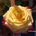 Temps de flors_0134 thumbnail