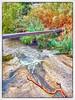 Ρέμα Πικροδάφνης (Έδεμ) . Λεπτομέρεια, μετά από δυνατή βροχή, 21 Νοεμβρίου 2013 (do_kimi) Tags: ρέμαπικροδάφνησ άλιμοσ γεφύρι καλαμάκι παλαιόφάληρο γούσιασ httpgousiasgr