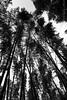 Bamboos of Arashiyama (Dekhana Photo) Tags: forest nature bw tree path park parc japan bamboo kyoto asia wall blackwhite blackandwhite atmosphere canon5d markiii grove japon thick arashiyama sagano andregenel dekhana chikurin no michi