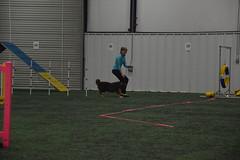 DSC_6607 (jaimekay16) Tags: dog agility k9x k9 xpress leander texas