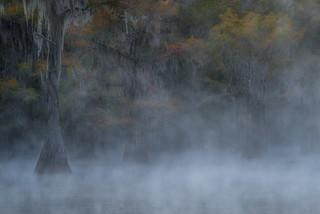 Southern Mist