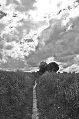 A Sunday Walk # 21 Path (just.Luc) Tags: pad path sentier pfad bn nb zw monochroom monotone monochrome bw clouds wolken nuages belgië belgien belgique belgica belgium vlaanderen flandres flanders bierbeek vlaamsbrabant europa europe sky lucht ciel luft