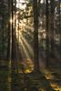 Follow Me Into The Woods (der_peste) Tags: forest intothewoods woods woodland woodlandlover autumn fall trees raysoflight raysofgod godrays lightrays sunbeams sunrays