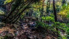 Caledonia Trail (39) (Polis Poliviou) Tags: nicosia autumn life polispoliviou polis poliviou πολυσ πολυβιου cyprus cyprustheallyearroundisland cyprusinyourheart yearroundisland zypern republicofcyprus κύπροσ cipro кипър chypre chipir chipre кіпр kipras ciprus cypr кипар cypern kypr ©polispoliviou2017 europe fall naturephotography forestphotography heritage mediterranean morning 2017 caledoniawaterfalls troodosmountains kalidoniawaterfalls naturepics forest tree trees trekking walking hiking nationalpark nationaltrail leaf leaves water waterfall waterfalls platanus platanustree planetree planetrees caledoniafalls naturetrail naturepath pinetree love relax relaxing longexposure
