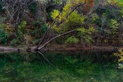 Yellows and Greens of Bull Creek (thor_mark ) Tags: austinpark azimuth180 bullcreek colorofleaves coloroftrees landscape lightroomedited lookingsouth nature nikond800e outside portfolio project365 stedwardspark stedwardsparkcreektrail trees water austin tx unitedstates