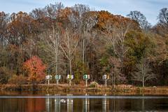 Lake Kittamaqundi in Fall (Karol A Olson) Tags: columbia maryland fall nov17 trees lakekittamaqundi lake autumn birds gailholliday posters