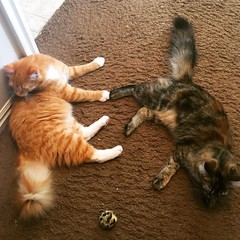 Takin' A Break (LionessLeesha) Tags: lagata feline animal sisters resting takingabreak lounge ball hallway 6monthsold kittens cats cat