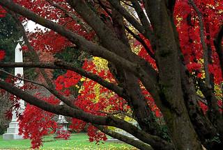 """Cincinnati – Spring Grove Cemetery & Arboretum """"Autumn Pushes Back Obelisk"""