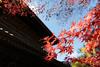2017.11.16 漢陽寺_C2A1080 (YUTA58) Tags: japan yamaguchi canon eos 5dmarkⅲ autumnleaves 日本 山口県 周南市 鹿野 漢陽寺 紅葉 一眼レフ 秋