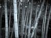 Bamboo (idreamofdaylight) Tags: 2017 gh5 japan lumix mft panasonic tokyo bamboo forest wood lines monochrome handheld