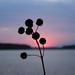 Dan River Sunset