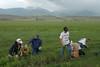 Livestock097 (NRCS Montana) Tags: weeds weedcontrol