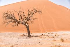 Dead tree in Sossusvlei, Namibia (George Pachantouris) Tags: namibia africa southern travel holiday desert namib sossusvlei deadvlei hot sand dune dunes