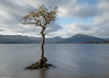 Loch Lomond tree (Donard850) Tags: lochlomond scotland trossachs landscape longexposure sky tree water